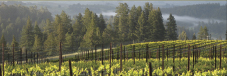 Horseshoe Bend Vineyard
